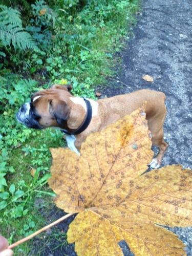 Herbstbilder Hunde