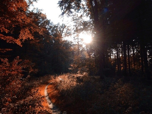 Herbstbilder Herbstwald