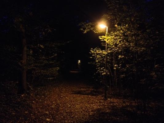 Herbstwald HDR Bild abends