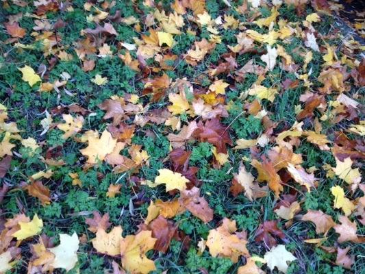 Herbstblätter Herbstlaub